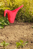 Red water can in garden Stock Image