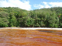Red water. Exotic landscape with high contrasts of red water and the green of the jungle. Canaima Lagoon, Venezuela Stock Photography