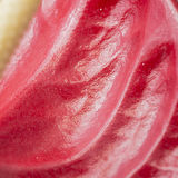 Red water lily flower petal close up texture Royalty Free Stock Photo