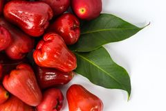 Red water rose apple fruit Stock Image