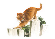 Red watercolor cat looks down on the fence illustration Royalty Free Stock Images