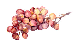 Red watercolor grape Royalty Free Stock Photography