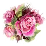 Watercolor flowers. Roses Royalty Free Stock Photo