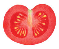 Red watercolor tomato Stock Photography