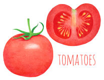 Red watercolor tomato Stock Images