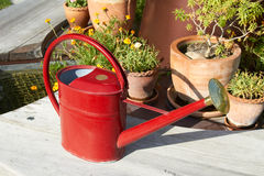 Red watering Can Stock Photos