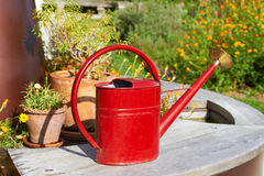 Red watering Can Stock Photo