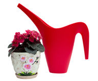 Red watering can and flower in a pot Stock Images