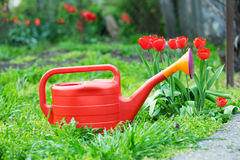 Red watering can in the garden Royalty Free Stock Photo