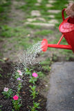 Red watering can sprinkling fresh pink spring flowers Stock Image