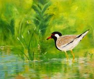 Red-Wattled Lapwing, Acrylic Painting Royalty Free Stock Photography