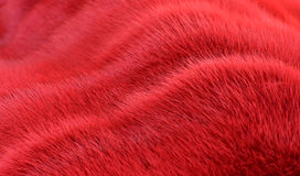 Red wavy fur background Royalty Free Stock Images