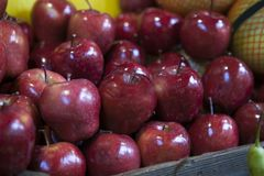 Red wax apples on the market for sale Royalty Free Stock Image