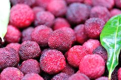 Red waxberry market Stock Photography
