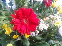 Red wedding flower. Red flower in a wedding party Royalty Free Stock Photos