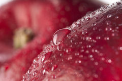 Red wet apple with big drops. Royalty Free Stock Photo