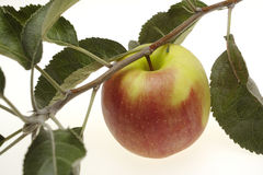 Red wet apple with leaf Royalty Free Stock Images