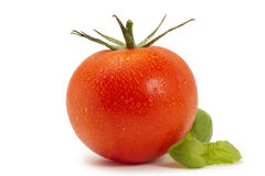 Red wet tomato with basil. On white background Royalty Free Stock Image