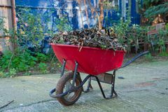 Red Wheelbarrow filled with leaves stock photography