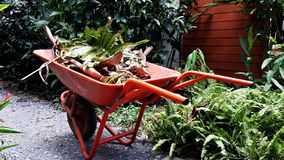 Red wheelbarrow full of leaves Royalty Free Stock Images