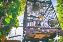 Red-whiskered bulbul bird in a bamboo cage. Red-whiskered bulbul in a bamboo cage, tradition bird cage in southern of Thailand. Selective focus on the bird Stock Photos