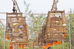 Red-whiskered bulbul birdcage sound competitions Stock Image