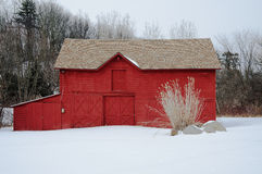 Red on White. Snow and pampass grass accent a beautiful red barn in Guilderland, NY Royalty Free Stock Photography
