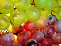 Red and white. Grape (Close-up back-light Royalty Free Stock Images