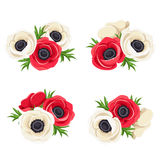 Red and white anemone flowers. Vector illustration. Vector set of red and white anemone flowers on a white background Stock Photo
