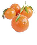 Red on a white background Tangerine with leaf. Red on a white background Mandarin Royalty Free Stock Images