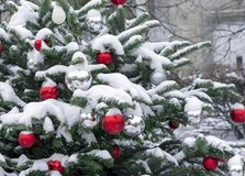 Red and white balls on a snow-covered Christmas tree. Decorations New Year, Christmas.  royalty free stock photo