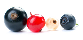 Red, white and black currant. On a white background Stock Photos