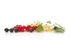 Red, white and black currant. Red, white and black currant on white background with reflection. Healthy summer fruit eating Royalty Free Stock Image