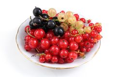 Red, white and black currant on dish. Different currant varieties. Harvest. Organic currant berries Stock Photo