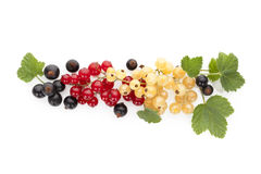 Red, white and black currant on white background. Royalty Free Stock Photo
