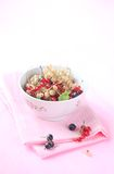 Red, White and Black Currants. On a pink background Stock Images