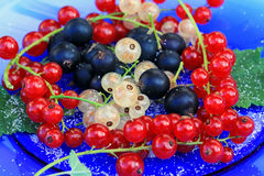 Red, white and black currants. Tasty and healthy red, white and black currants with sugar Stock Images