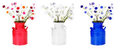 Red white & blue flower arrangements. Vases of oxeye daisies & lavender in red white & blue Stock Images
