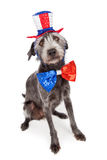 Red White and Blue Terrier Dog Stock Photos