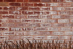 Red and white brick background with dead grass at the bottom Royalty Free Stock Photo