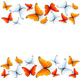 Red and white butterflies on white background Royalty Free Stock Photography