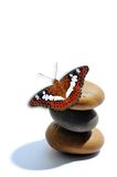 Red white butterfly on stone isolated on white. Red white butterfly on stone isolated white Royalty Free Stock Images