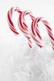 Red and White Candy Canes Royalty Free Stock Image