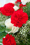 Red and White Carnations Royalty Free Stock Image