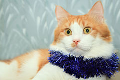 Red and white cat with christmas tinsel decoration Royalty Free Stock Images