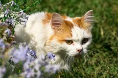Red white cat. Among the green grass Royalty Free Stock Photos