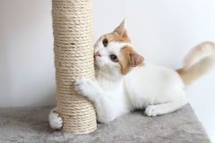 Red and white cat and scratching post Stock Photo