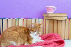 Red and white cat sleeping on pink scarf Royalty Free Stock Images