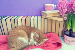 Red and white cat sleeping on pink scarf. Toned. Royalty Free Stock Photography