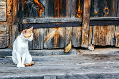 Red and white cat with small kittens against a wooden wall of old wooden hut in a countryside.Cats family. Rustic style. Stock Image